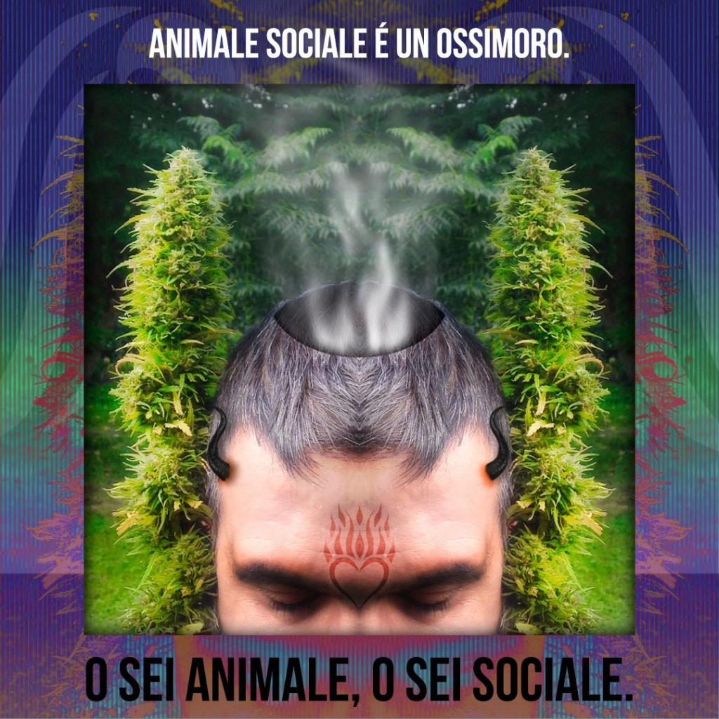 Animale sociale è un ossimoro. O sei un animale, o sei sociale.
